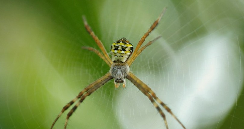 How to Prevent Spiders and Other Unwanted Pests